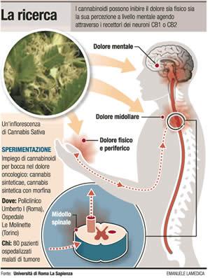 Cannabis e Dolore Neuropatico - FreeWeed