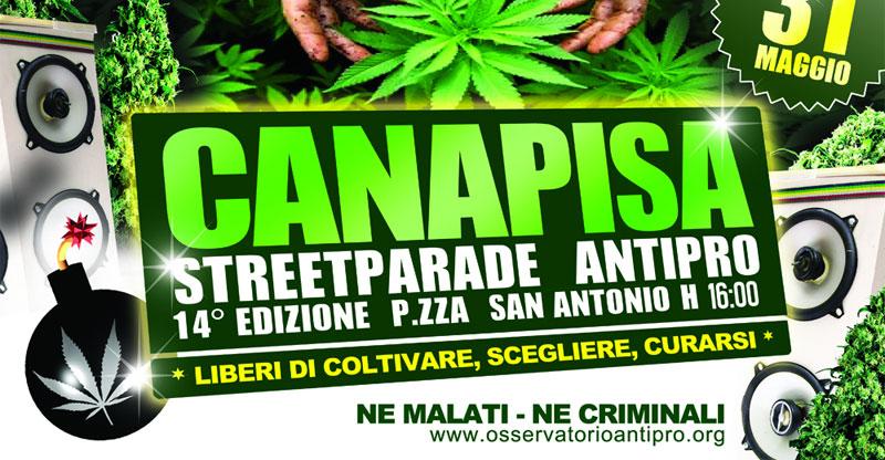 'Osservatorio antiproibizionista Canapisa Crew Colettivo Pisa